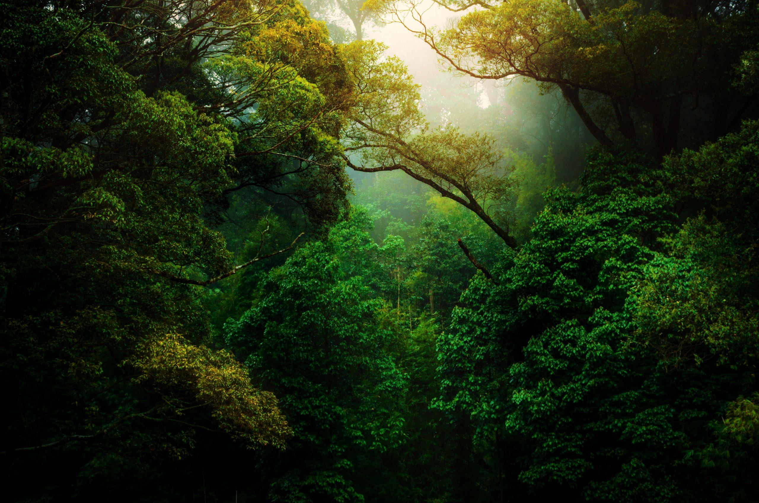 Ayurvéda & yoga : doux passage dans la transition de l'automne